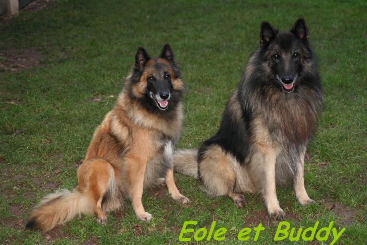 eole et buddy