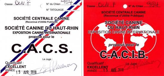 Cacs cacib mulhouse 0001