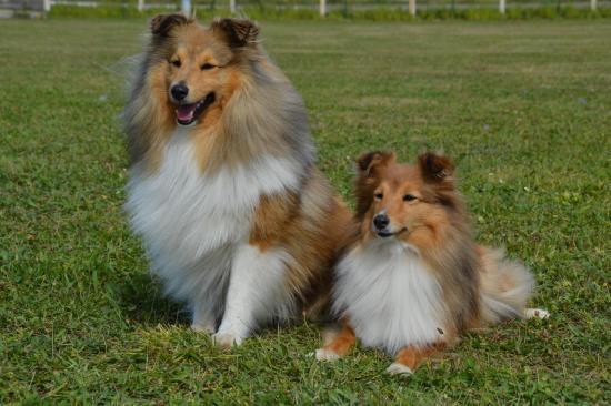 Hichka et leone 4