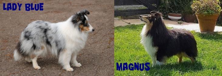 Lady magnus