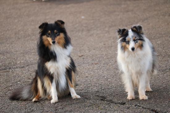 Lola et lady