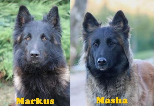 Masha et markus 1