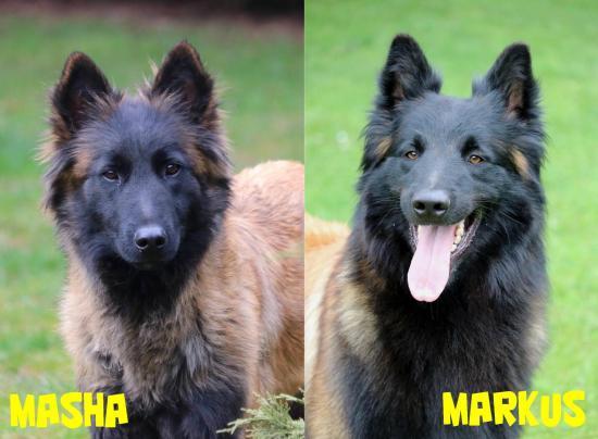Masha et markus