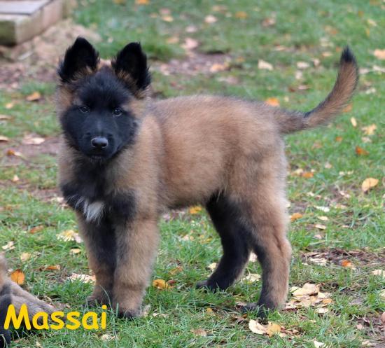 Massai et masha 4