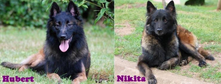 Nikita et hubert